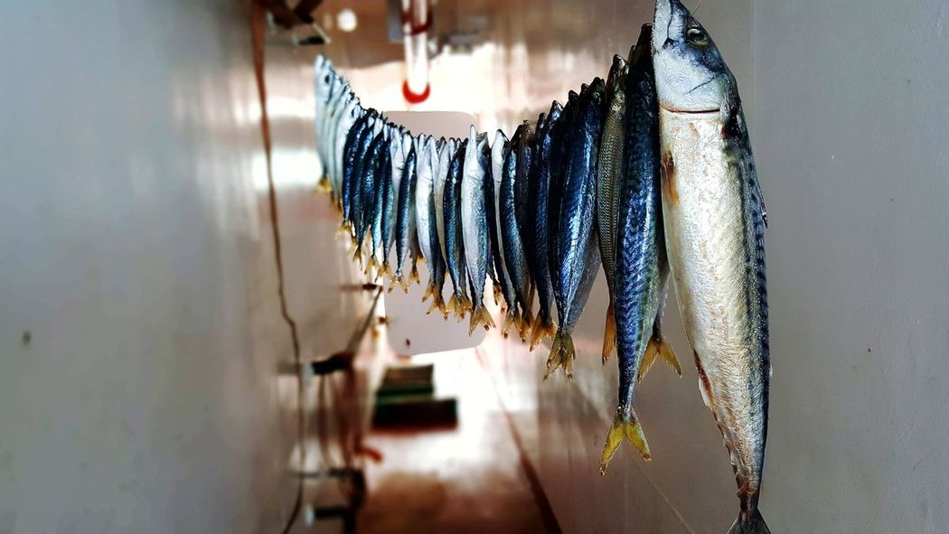 Hanging Indoors  No People Day Close-up Sky Sealife Sealife♡ Lifestyles Nature Fishing Fishes Fish Dry Fish Kerala Style .... Corsica ❤️ 2017 EyeEm Awards The Photojournalist - 2017 EyeEm Awards