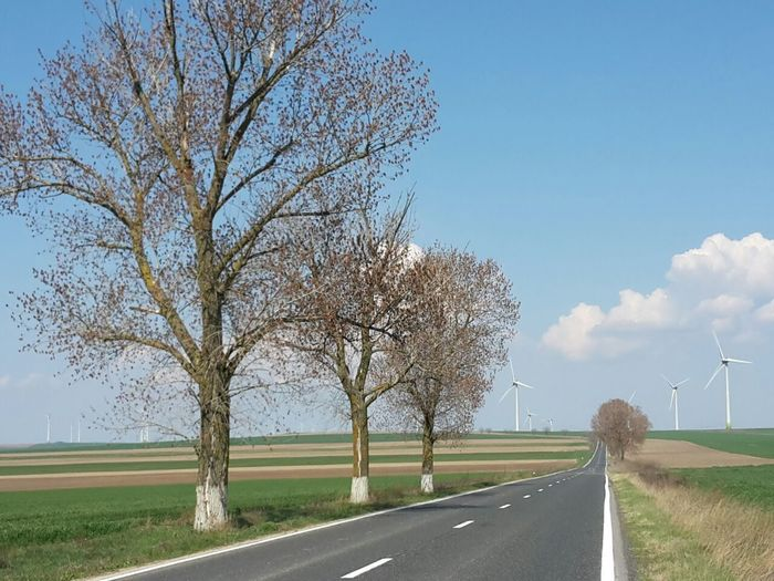 Bare tree by road against clear sky