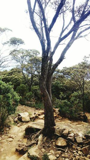 🌟 Tree Branch