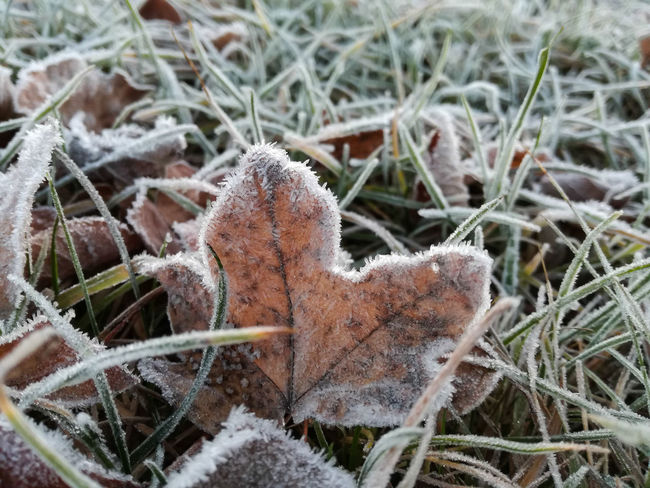 """""""first frost"""" Animal Themes Autumn Beauty In Nature Close-up Cold Temperature Cristal Day Frost Grass Grass Growth Hedgehog Leaves Mammal Nature Nature Nature On Your Doorstep Nature Photography Naturelovers No People One Animal Outdoors Pets Plant Winter"""