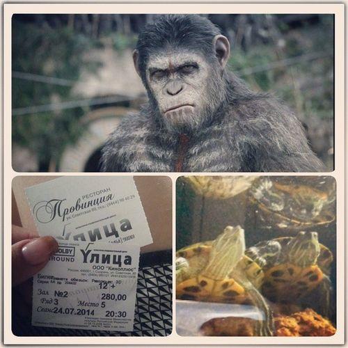 """Была на сызранской премьере фильма """"Планета обезьян: революция"""". На неделю позже мировой премьеры. этосызраньдетка . имеюсказать , что мне очень понравилось. Качество прорисовки в разы лучше 1 части, сюжет не совсем примитивен, хотя порой очень предсказуем. Но тем не менее, я осталась довольна. ИМХО"""