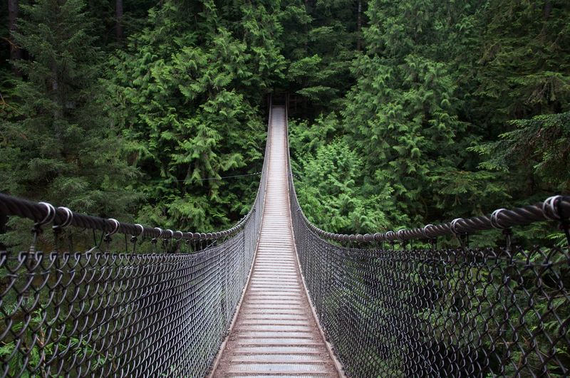 The Lynn Canyon Suspension Bridge, British Columbia - Canada Bridge Forest Nature First Eyeem Photo