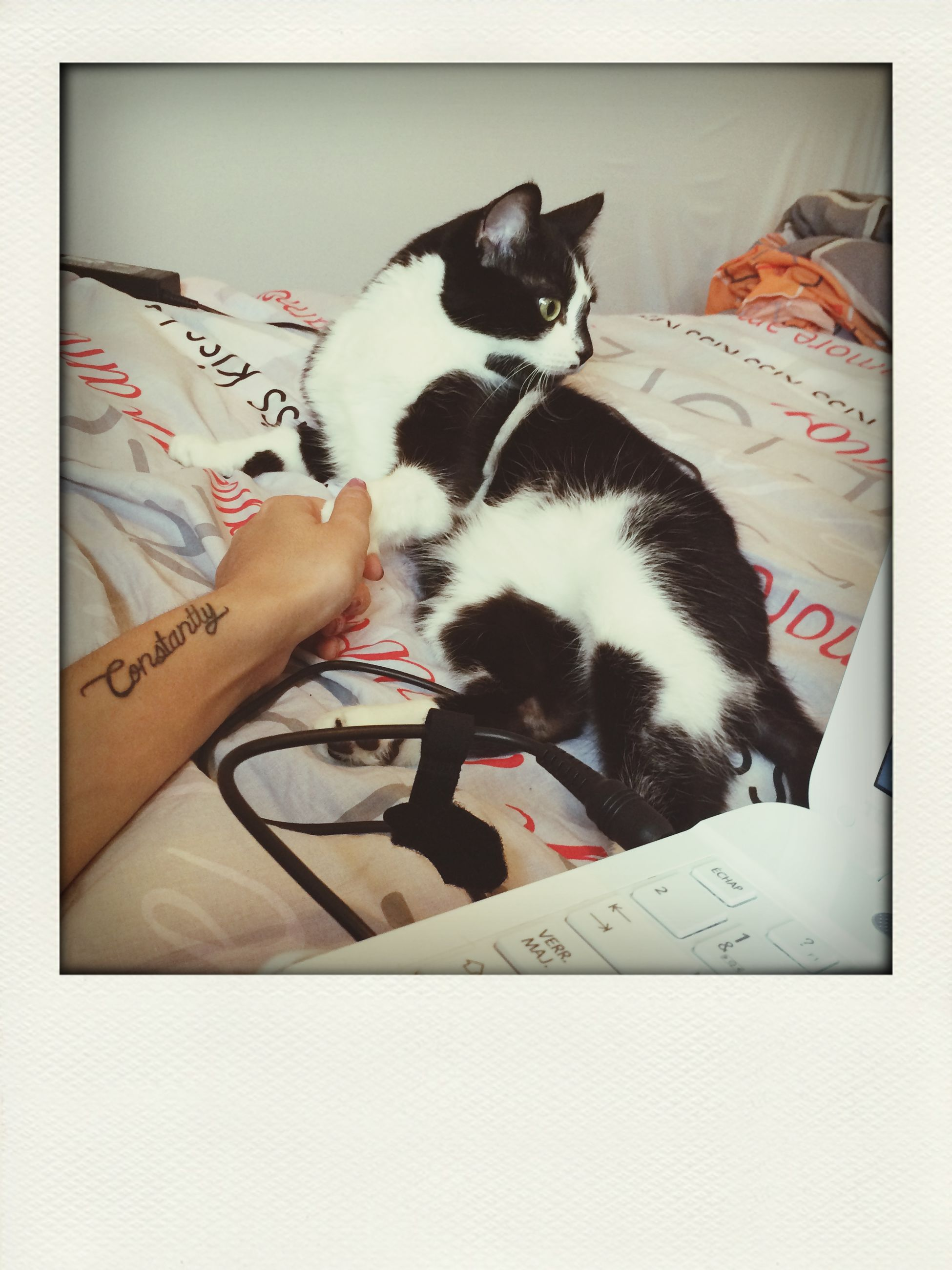 pets, domestic animals, domestic cat, indoors, cat, animal themes, one animal, mammal, relaxation, feline, bed, lying down, resting, sleeping, auto post production filter, transfer print, high angle view, pillow, home interior, bedroom