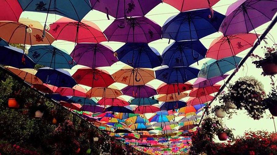 Hangingumbrellas Colourful Followme Follow4follow Followback DubaiMiracleGarden Multicolour