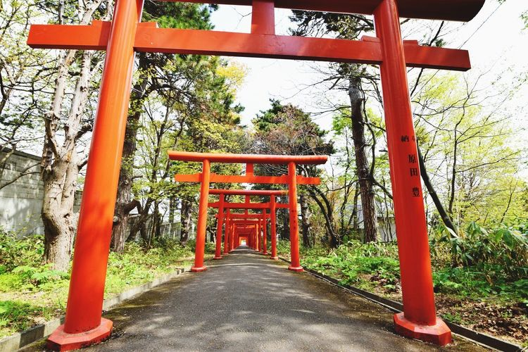 sapporo fushimi-inari shrine Shurine Nikon NIKON D5300 Tamron10_24 Sapporo EyeEmNewHere The Way Forward Place Of Worship Direction Built Structure Architecture Religion Spirituality
