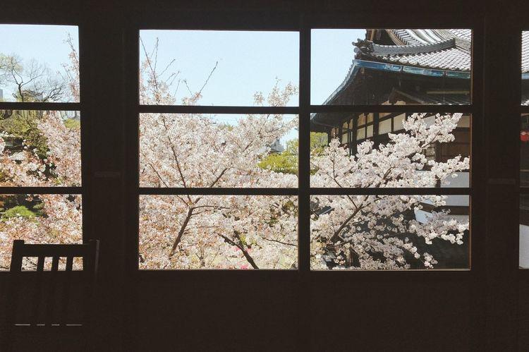 Kyoto Sakura Ancient Architecture PhonePhotography