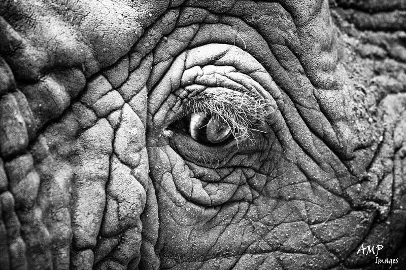 So much motion in this ekrphants eye as he recovers in a rehabilitation park. Africa Elephant Emotion Taking Photos Wildlife Animal