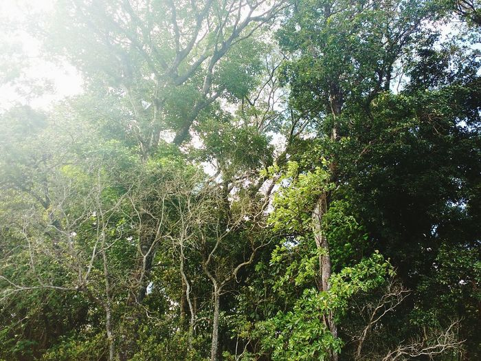 Green Peacegreen Nature Photography Sunlight Art Is Everywhere EyeEmNewHere Break The Mold TCPM EyeEm Selects Sommergefühle