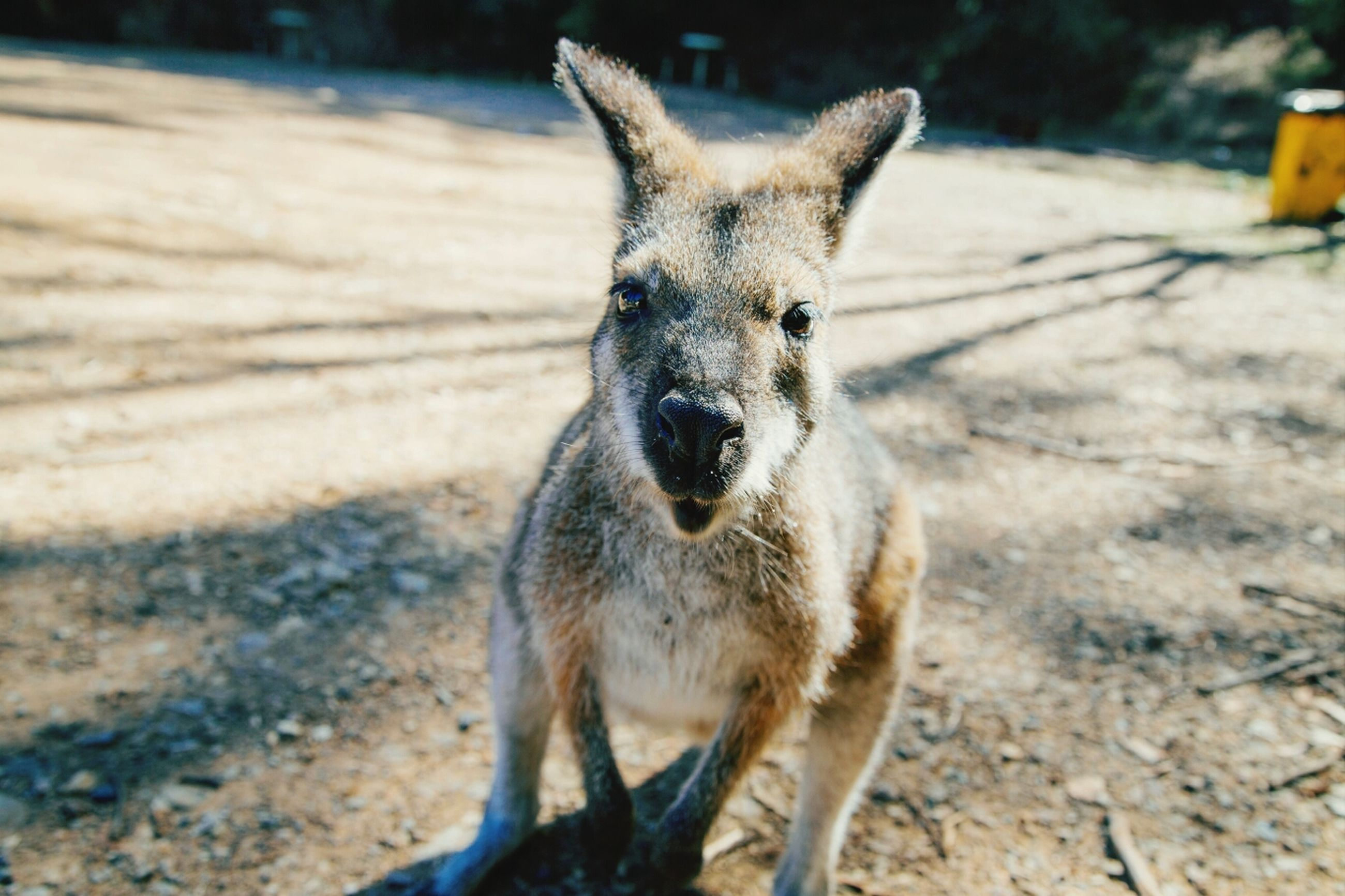 animal themes, one animal, mammal, focus on foreground, domestic animals, pets, portrait, looking away, close-up, standing, front view, animal head, sitting, whisker, outdoors, day, alertness, full length, wildlife