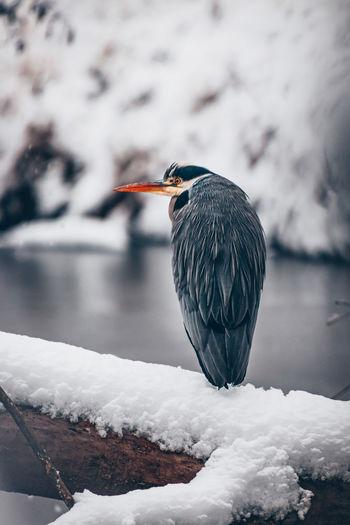 Bird perching on frozen lake during winter