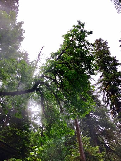 The earth's lung Tree Plant Low Angle View Growth Branch Beauty In Nature Sky