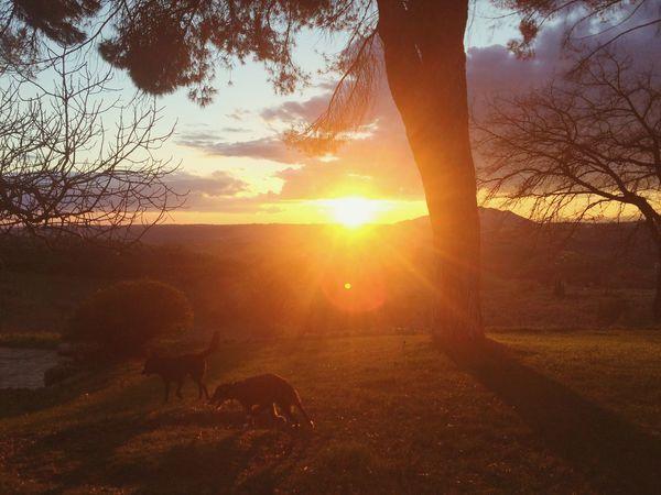 My piece of heaven Eyem Nature Lovers  Bliss Happydogs Susnset Roman Countryside Eyemphotography