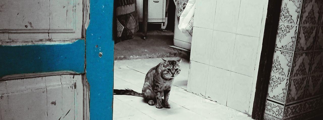 TUNISIAN CAT Cat Cats Cat Lovers Cat♡ Kitty Kittens Tunisie Tunisia Tunis House Typical Animals
