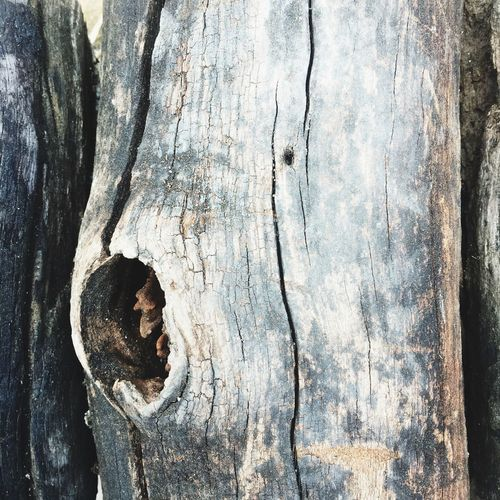 Wood - Material Textured  Weathered Tree Trunk No People Close-up Day Tree Outdoors Nature