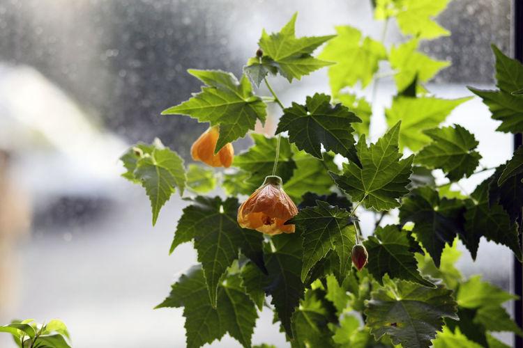 Close-up of orange flowering plant against trees