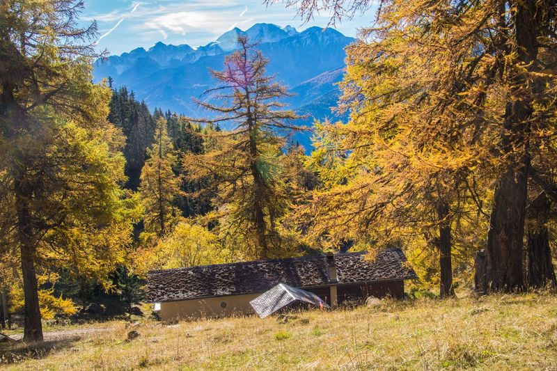 col of lien,valais,swiss Tree Autumn Change Plant Nature Beauty In Nature Land Tranquil Scene Mountain Day Tranquility Sky No People Scenics - Nature Environment Landscape Forest Growth Architecture Non-urban Scene Outdoors Fall