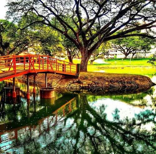 Lakeview Reflection Tree Water Nature Outdoors Beauty In Nature Lake No People Waterfront Tranquility Scenics Bridge