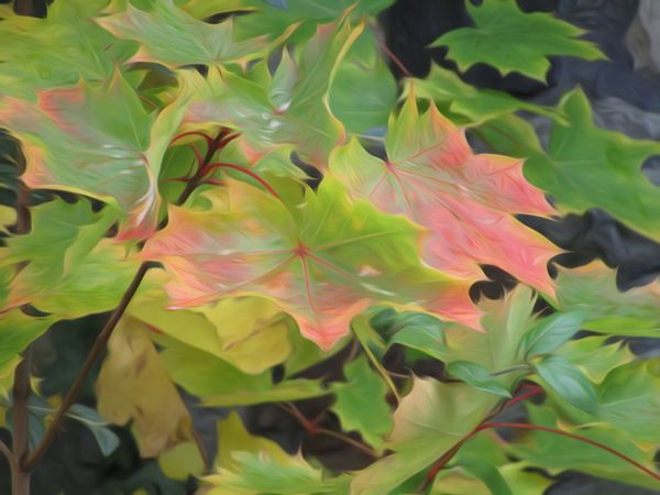 Leaf Growth Close-up Plant Freshness Beauty In Nature Green Green Color Vibrant Color Nature On Your Doorstep Changing Colors Nature Autumn Season  Change Leaves Beauty In Nature