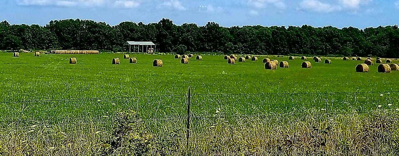 Hay bales on landscape against sky