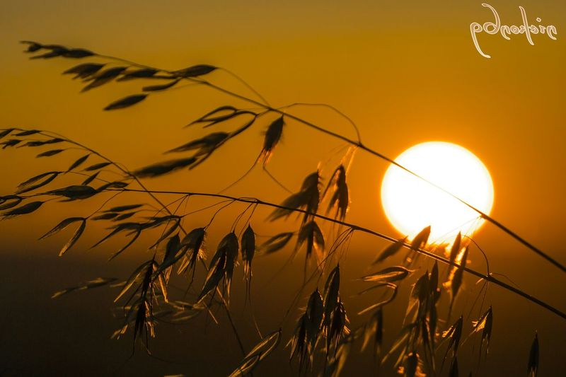 Sunset Picsart_family Sun Photography