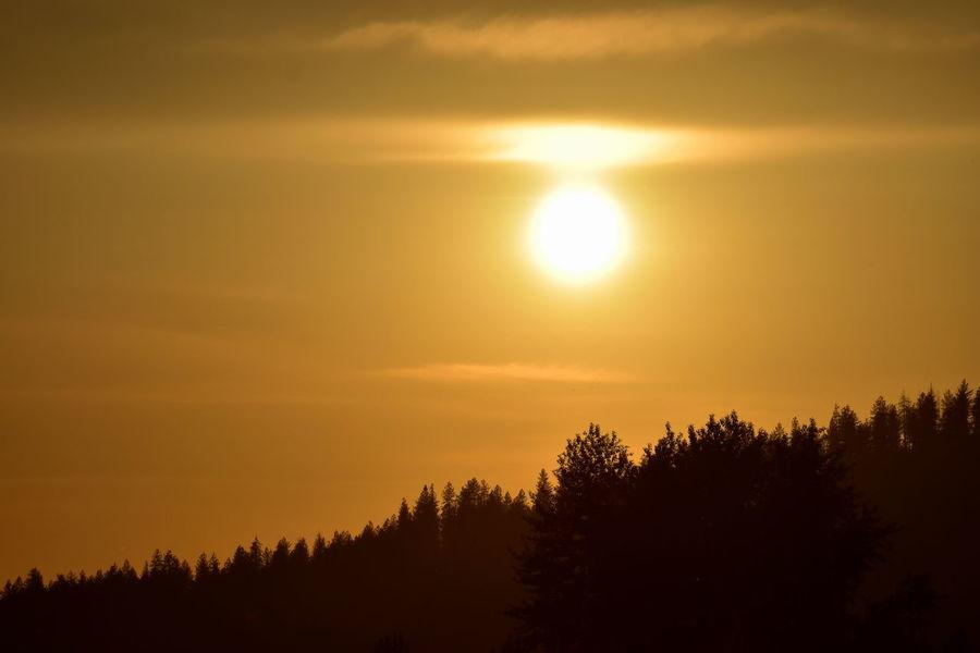 Beauty In Nature Cloud - Sky Environment Idyllic Land Nature No People Non-urban Scene Orange Color Plant Scenics - Nature Silhouette Sky Sun Sunlight Sunset Tranquil Scene Tranquility Tree