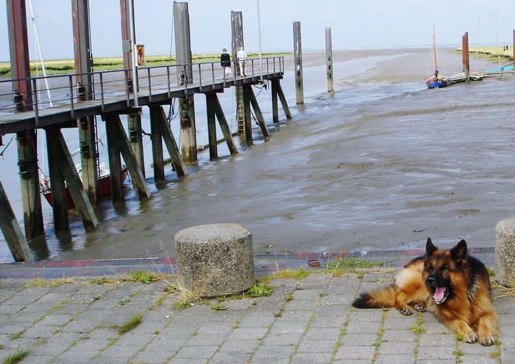 Snapshots Of Life Eyeem Missions Dog❤ Eyeem4photography I Love My Dogs Eyeem Animal Holidays German Shepherd My Dogs Are Cooler Than Your Kids Taking Pictures On The Way