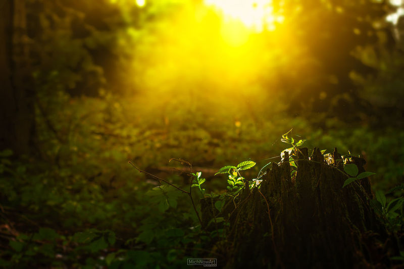 Bokeh Sunrays Canon Sun Natural Parkland Leopard Thick Wilderness Sunset WoodLand Animal Themes Grass Cheetah Rainforest Forest Fire Tree Canopy  Wildlife Reserve Animals Hunting Blooming