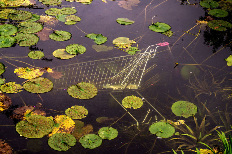 Underwatershopping :) Shopping Cart Autumn Beauty In Nature Consumerism Day Floating On Water Green Color Growth High Angle View Lake Leaf Lily Pad Modern Society Nature No People Outdoors Plant Rubbish Waste Throwaway Tranquility Waste Water Water Lily