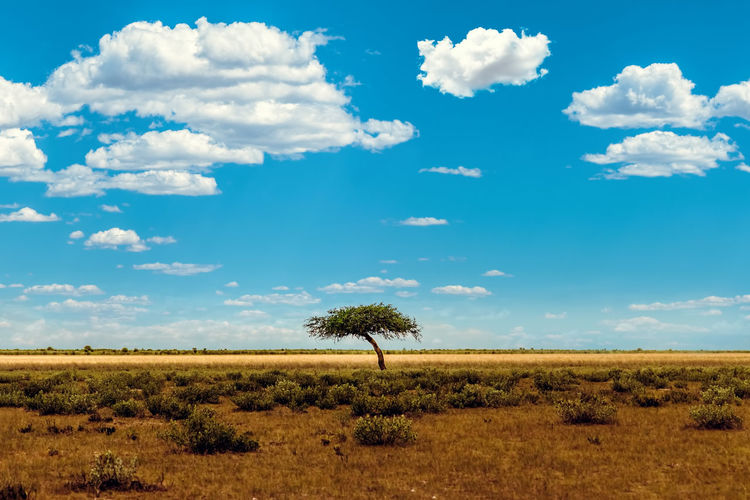 Beauty In Nature Blue Sky Cloud - Sky Color Day Field Landscape Nature No People Outdoors Scenics Single Tree Sky Tree