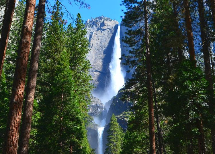 Waterfall Forest Beauty In Nature Outdoors Nature California Yosemite National Park, California Yosemite Falls Yosemitevalley California Dreaming Travelphotography Waterfalls Tree Low Angle View Motion No People Day Scenics Water Growth Sky Freshness