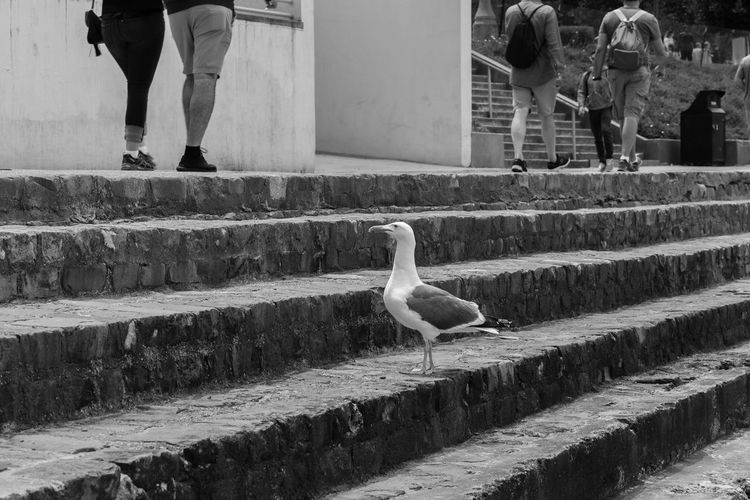 View of bird on steps