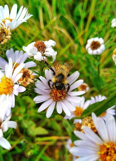 Beautiful Nature..plant and insect!!! Flower Insect One Animal Animal Themes Animals In The Wild Nature White Color Growth Freshness Pollination No People Pollen EyeEm Nature Lover The Week On EyeEm Check This Out! Popular Photographs EyeEm Gallery Beautiful Nature Autumn Nature Growth Togetherness Full Length Grass Daisy Flower