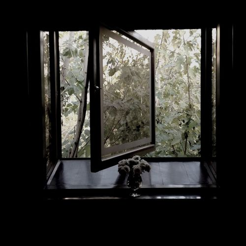 Window Cafe