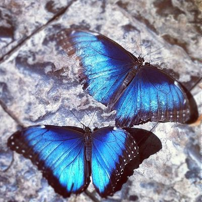 Beautiful Butterflies. Enjoying Life Relaxing Hi! Hanging Out