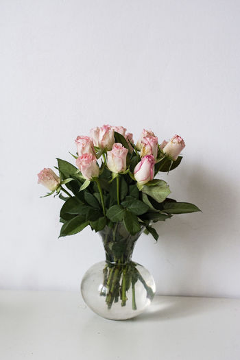 Close-up of rose plant in vase