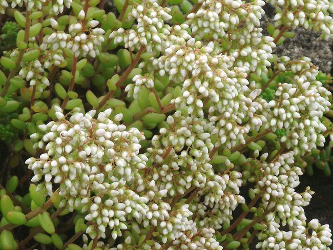Walking Around Hollingworth Lake White Flowers White Color EyeEm Flower EyeEm Best Shots - Flowers
