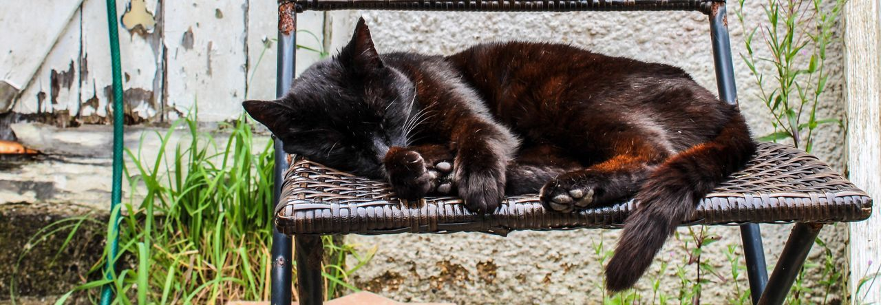Check This Out Cat Baggy Garden Resting Cats Catnap