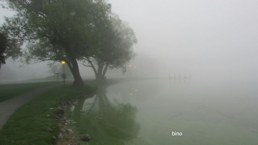 Early Shoot At The Lake Foggy Morning Lots Of Green!! Cool_capture_ Eerie Scene Tranquility Lake Cadillac Pure Michigan