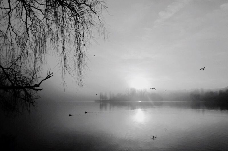 Blackandwhite EyeEm Best Shots Water Reflections Eye Em Nature Lover Walking Around Photography Tadaa Community Peace And Quiet Landscape Silhouette