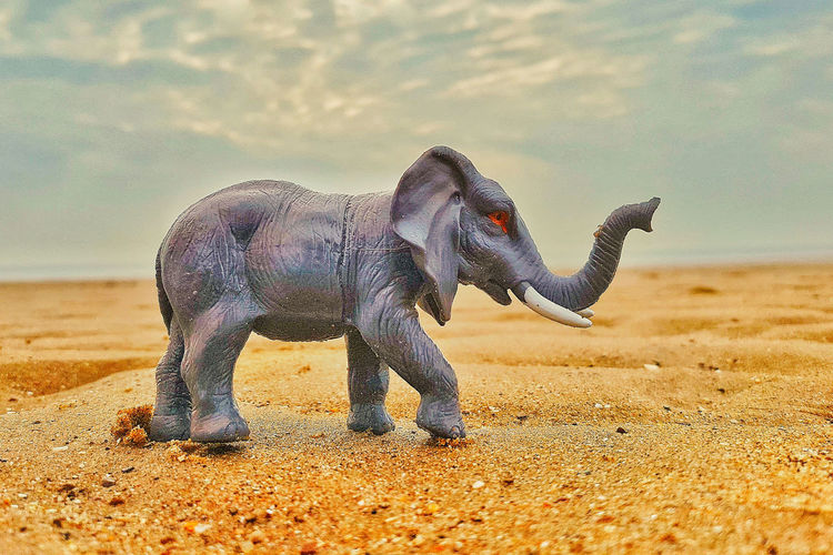 A toy elephant crying blood? Crying Animal Animal Animal Themes Animal Wildlife Animals In The Wild Beach Day Dust Elephant Full Length Herbivorous Land Mammal Nature No People One Animal Outdoors Sand Selective Focus Side View Sky Standing Toy Elephant Toy Photography Vertebrate EyeEmNewHere Visual Creativity