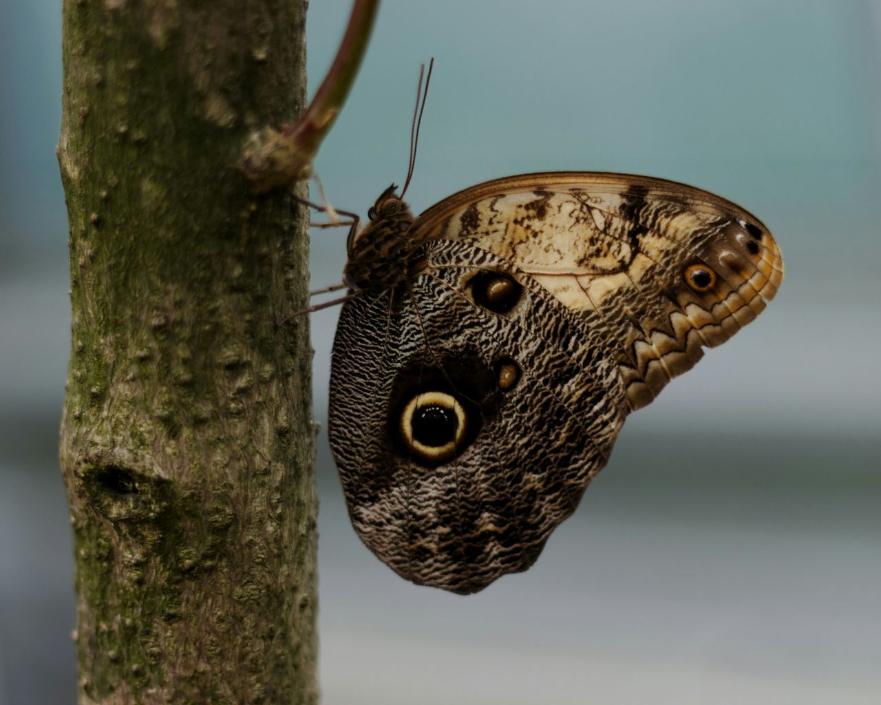 Close-Up Of Butterfly Perching On Stem