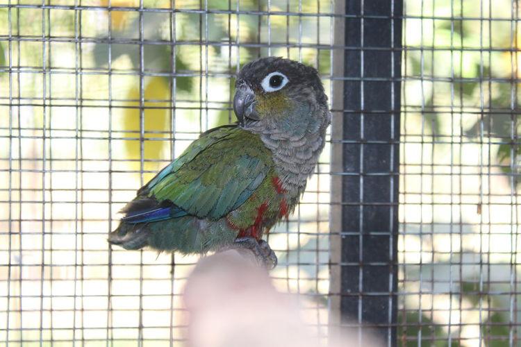 Cage Birdcage