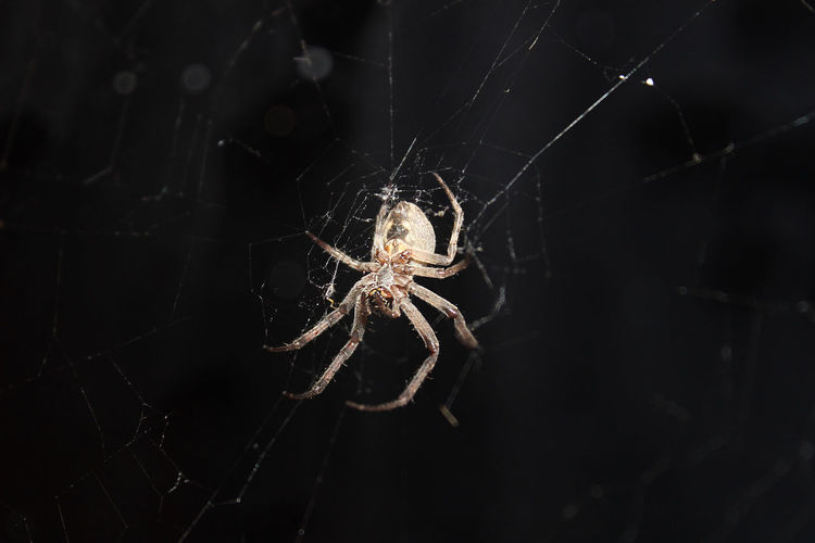 Terrible beauty. Animal Animal Leg Arachnid Black Background Close-up Focus On Foreground One Animal Spider Spider Web Terrible Moment Web EyeEmNewHere