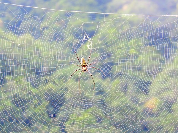 Spider Web Spider Web Fragility One Animal Insect Nature Animal Themes Animals In The Wild Outdoors Close-up Day No People Backgrounds Beauty In Nature The Week On EyeEm EyeEmNewHere Complexity Nature