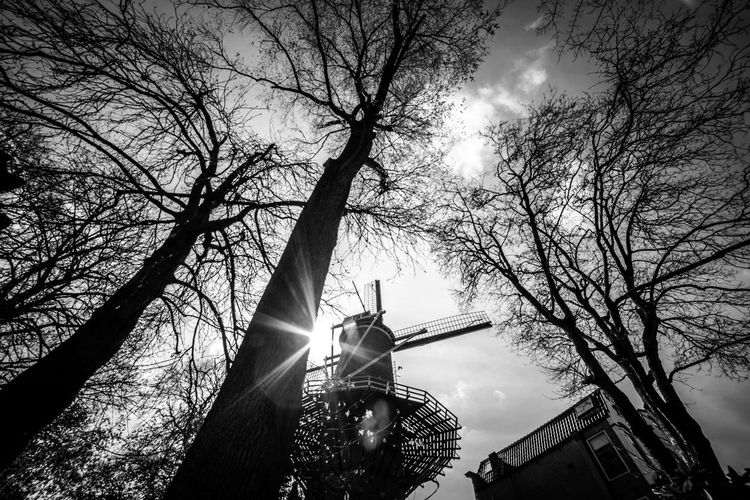 Mill backlit Tree Architecture Low Angle View Sky Statue Nature Built Structure Human Representation Bare Tree Sculpture Building Exterior Representation Plant Branch Art And Craft Sunlight Spirituality Religion Belief Sun No People Outdoors Lens Flare Angel