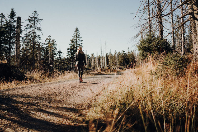 Woman hiking on forest road Road Forest Hiking Outdoors Walking Woman Autumn Sunset Leisure Activity
