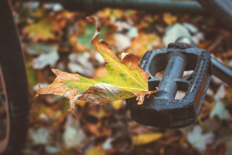 Autumn Bysicle Change Day Leaf Nature No People Pedal