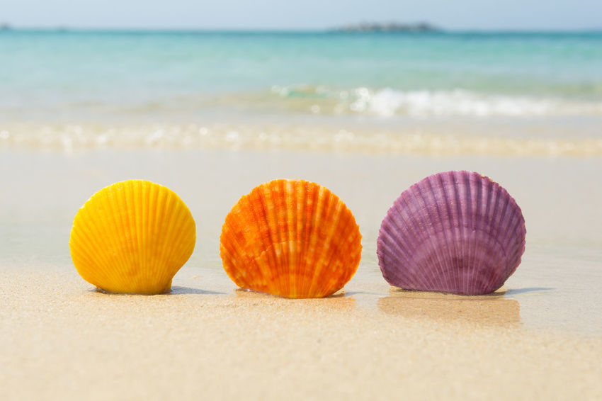 Sea shells in natural vibrant colors on the beach Exotic Freshness In A Row Natural Nature Summertime Sunny Travel Vacations Wave Beach Beauty In Nature Ocean Sand Scallop Sea Seashell Seaside Shell Spa Summer Tropical Turquoise Variation Vibrant