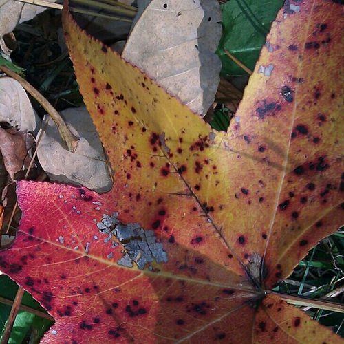 leavesss