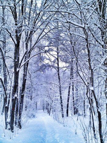 Nature Path Winter Snow